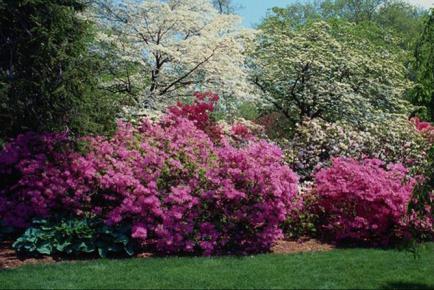 Какое время года лучше подходит для высадки деревьев в саду
