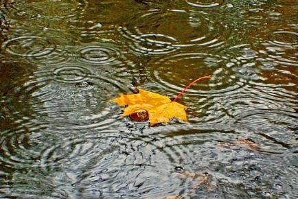 Куда деть дождевую воду?